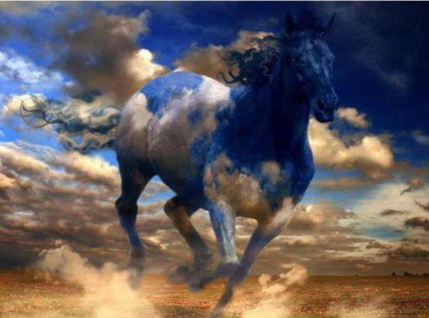 beautyhorse4