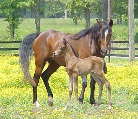 horse138